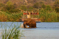 Elephant in River - Sefapane Lodge & Safaris - Malaria Free - Mapungubwe Reservations
