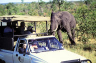 Game drive with Elephant - Sefapane Lodge & Safaris - Malaria Free - Mapungubwe Reservations